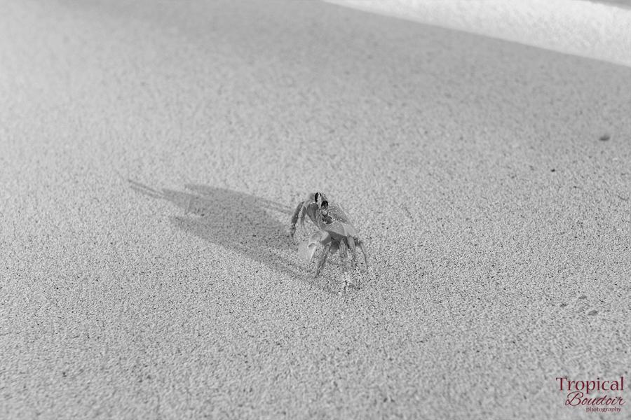 crab on the beach photo